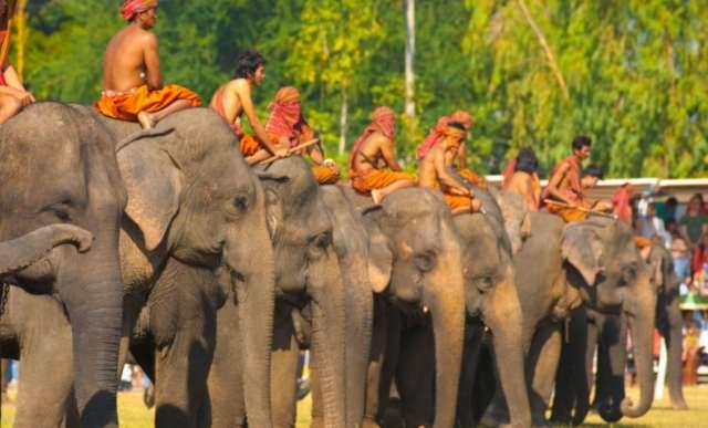 Surin-Elephant-Roundup