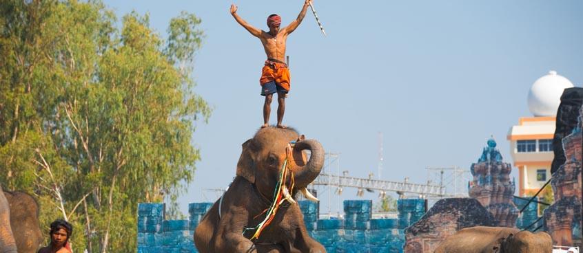 elephant-roundup-festival
