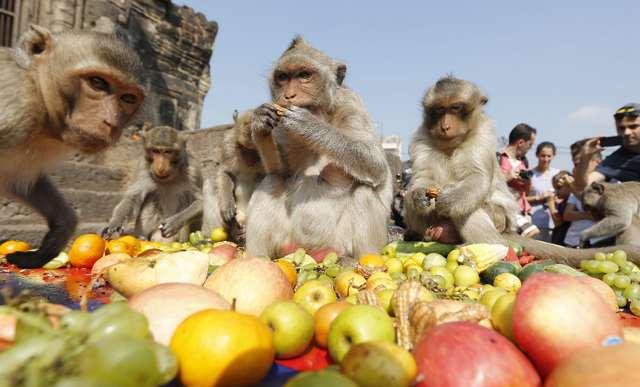 monkey-festival
