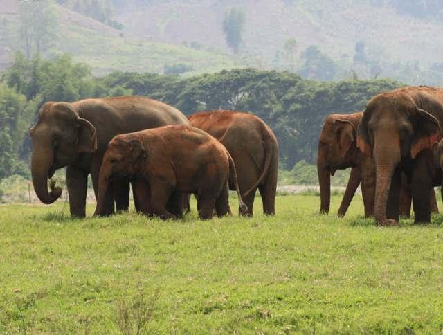 Elephant-Nature-Park-thailand
