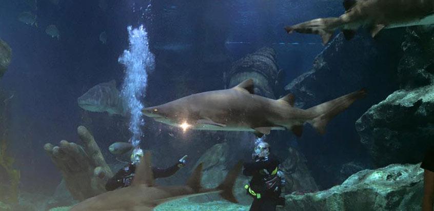 Exploring the Underwater Life