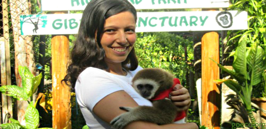 volunteer-in-gibbon-sanctuary