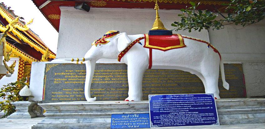 white-elephant