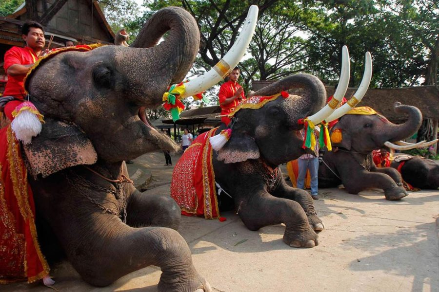 thai elephant day